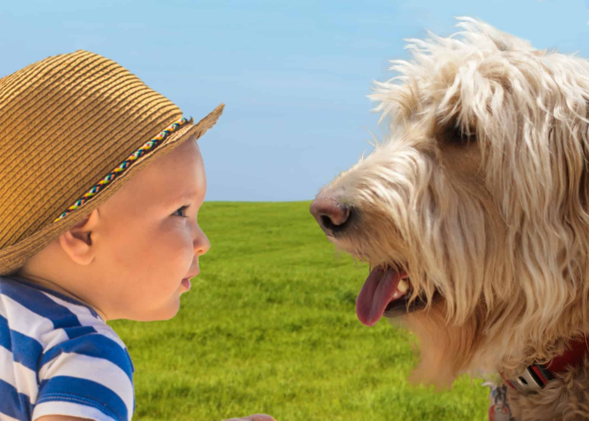 Are Goldendoodles Good With Children?
